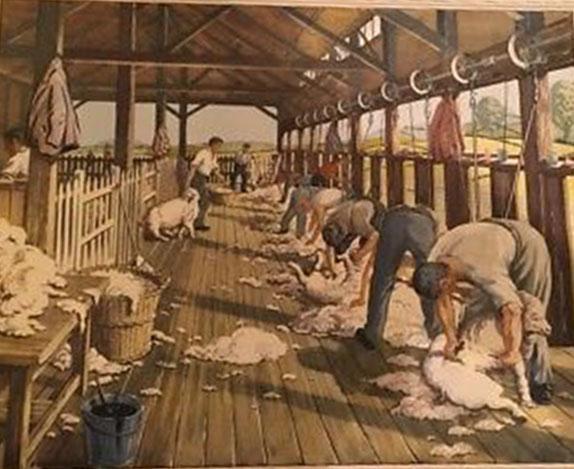 Vintage-Macmillan-school-print-No84-Sheep-Shearing-In-Australia